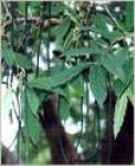 Mother Herbs (P) Ltd.