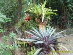 Flora Exotics